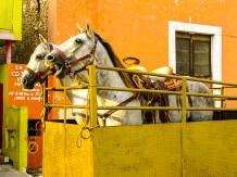 Horse Street Life by Jann Alexander © 2014-0766
