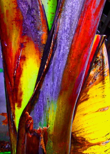 Banana Leaf by Jann Alexander © 2008