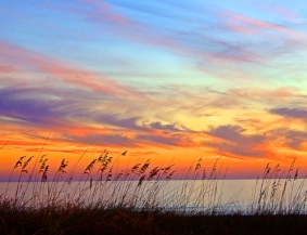 Sunset Grasses by Jann Alexander © 2012