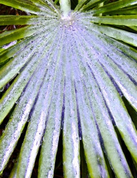 Icy Leaf by Jann Alexander © 2006