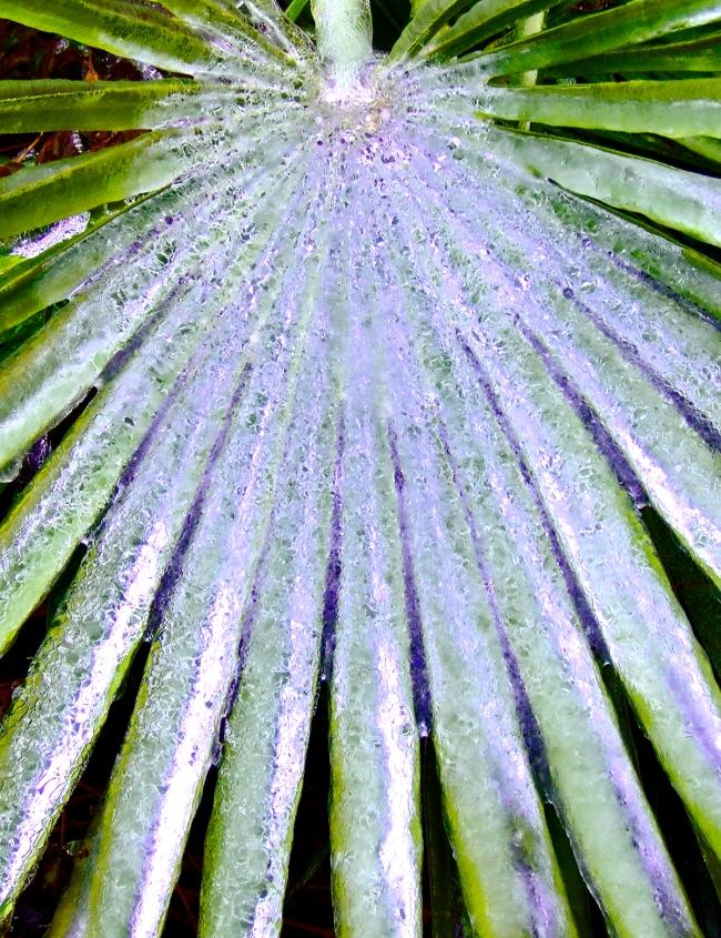 Icy Leaf by Jann Alexander © 2006