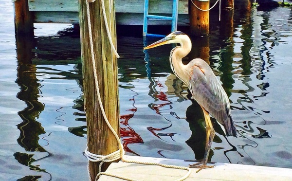 Patience on the Pier by Jann Alexander © 2014.jpg