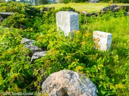 overgrown grave markers