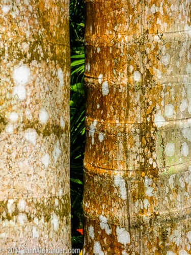 Mexico Textures by Jann Alexander ©2014-0434