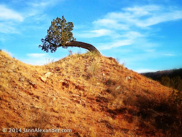 Vivid Tree by Jann Alexander ©2014