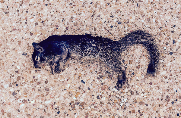 Sally's Squirrel ©2014