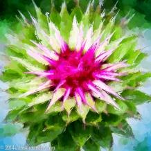 Flower Power by Jann Alexander ©2014