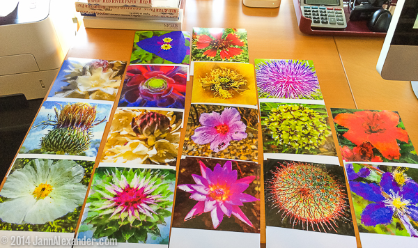 Flower Power prints, iPhoneography by Jann Alexander © 2014