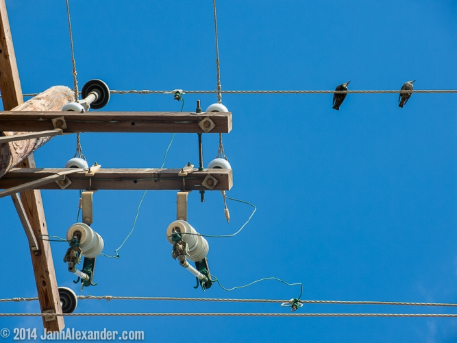 Birds on a Wire by Jann Alexander ©2014