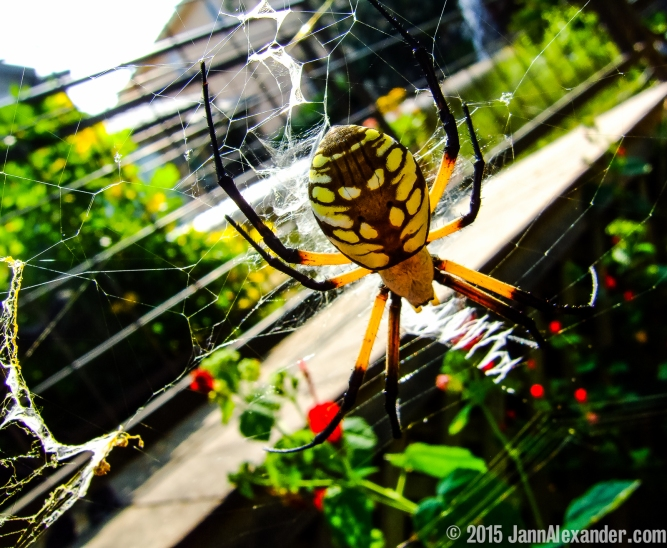 Tangled Web by Jann Alexander ©2015