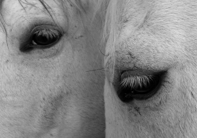 Lifesavers: Stable Relations, photographed by Anna Blake